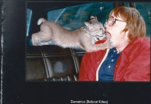 Bobcat Kitten and Kris